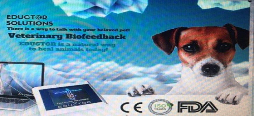 Kuantum Biofeedback Terapi