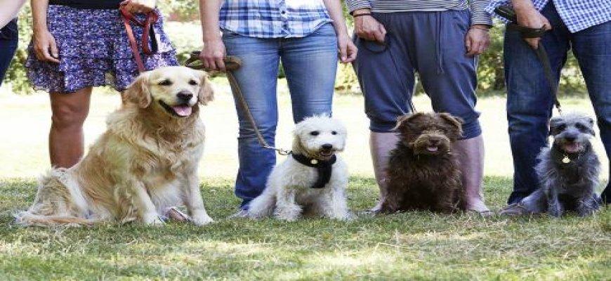 Köpek Eğitim Uzmanı Olmak İsteyenler