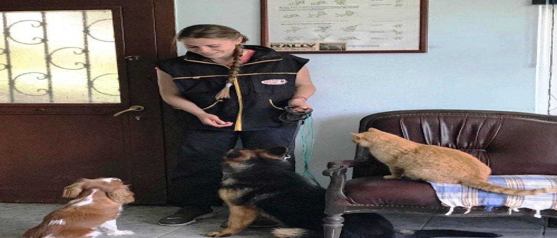Kedi-Köpek Eğitimi