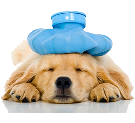 Dr.Vet. Hek. Gürbüz ERTÜRK             Köpek Eğitim Uzmanı / Eğitici Eğitmeni / Köpek psikoloğu /kedi psikoloğu /köpek psikiyatristi/Kedi psikiyatristi
