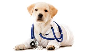 Dr.Vet. Hek. Gürbüz ERTÜRK             Köpek Eğitim Uzmanı / Eğitici Eğitmeni / Köpek psikoloğu /kedi psikoloğu